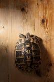 Schildpad op Hout royalty-vrije stock afbeelding