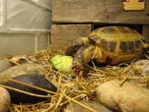 Schildpad over land Stock Foto's
