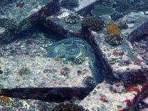 Schildpad tussen granietblokken in de oceaan Royalty-vrije Stock Foto