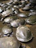 Schildpad uit de Amazone stock afbeeldingen