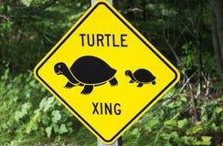 Schildpad xing Stock Afbeelding