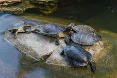 schildpadden Royalty-vrije Stock Fotografie