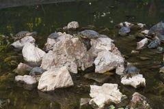 Schildpadden die foto zonnen Stock Fotografie