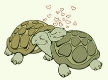 Schildpadden in liefde Stock Foto