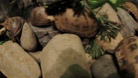 Schildpadden op een steenclose-up stock footage