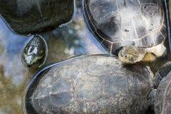 Schildpadden in park Royalty-vrije Stock Fotografie