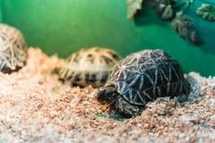 Schildpadden in terrarium Royalty-vrije Stock Fotografie