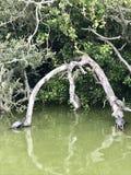 Schildpaddenfamilie stock foto
