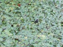 Schildpadhoofd in het gras stock fotografie