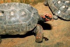 Schildpadhuisdier Royalty-vrije Stock Foto