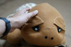 Schildpadpop Stock Foto's