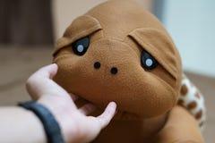 Schildpadpop Stock Foto