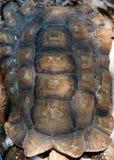 Schildpadshell Stock Foto's