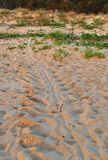 Schildpadsporen Oktober 2017 stock afbeeldingen