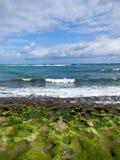 Schildpadstrand in Oahu, Hawaï Stock Afbeelding