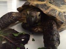 Schildpadtijd Royalty-vrije Stock Fotografie