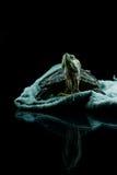 Schildpadzitting Stock Foto's