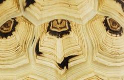 Schildpatt Stockbilder