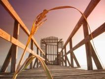 Schilf auf Mississippi-Pier lizenzfreies stockfoto