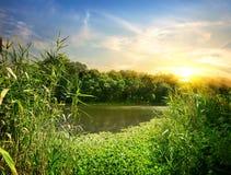 Schilfe auf dem Fluss lizenzfreie stockbilder