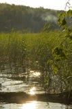 Schilfe auf dem See lizenzfreie stockfotografie
