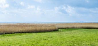 Schilfe beim Achterwasser auf der Insel von Usedom Stockbilder