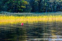 Schilfe durch den See Lizenzfreies Stockfoto