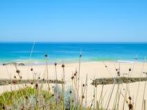 Schilfe durch den Strand Lizenzfreies Stockfoto