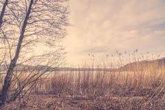 Schilfe durch einen See im Winter Stockbild
