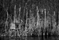 Schilfe in einem Teich Stockfoto