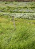 Schilfe, Gras und Zaun lizenzfreies stockbild