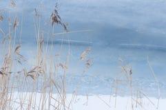 Schilfe im kalten Meer stockbilder