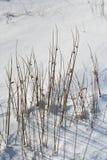 Schilfe im Schnee Enochdhu, Perthshire, Schottland Großbritannien Stockfotos