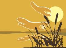 Schilfe im Sonnenuntergang. Lizenzfreie Stockfotos