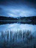 Schilfe Loughrigg Tarn Stockfoto
