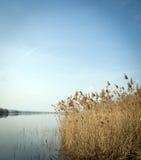 Schilfe und der See Stockfotografie