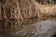 Schilfe und Stock am See im Spätherbst Lizenzfreie Stockfotografie