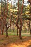 Schimären im Wald Stockbild
