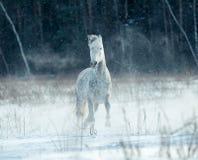 Schimmel auf dem schneebedeckten Gebiet Lizenzfreie Stockfotografie