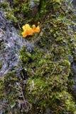 Schimmel fruiting organismen stock foto's