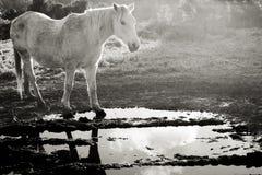 Schimmel reflektiert in einem Wasser Schwarzweiss-Foto Pekings, China stockfotografie