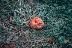 Schimmelige Frucht Apple stockbild