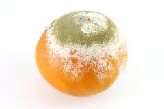 Schimmelige Orange Lizenzfreie Stockbilder