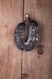 Schimmelige Salami, die an der Wand hängt Lizenzfreie Stockfotos