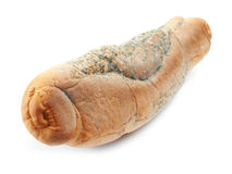 Schimmeliges Brot lizenzfreie stockfotos