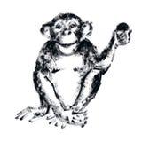 Schimpans med en frukt Royaltyfri Bild