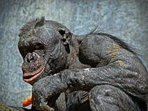 schimpanse Lizenzfreies Stockbild