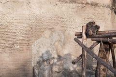 Schimpanse, der auf dem hölzernen Bodenbelag sitzt Stockbild