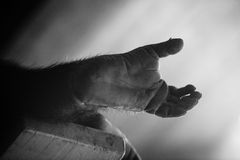 Schimpanse-Fuß Stockfoto