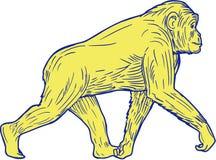 Schimpanse-gehende Seitenzeichnung Lizenzfreie Stockfotografie